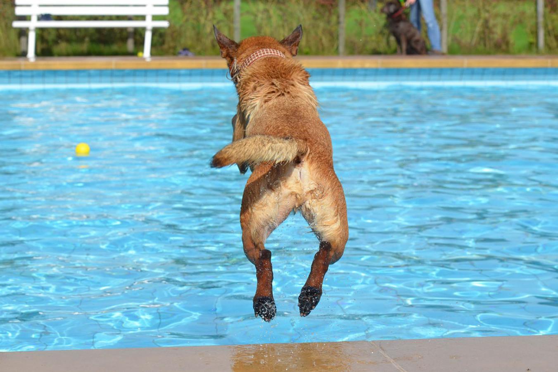 De laatste week met hondenzwemmen als afsluiter